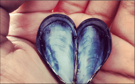Heart shaped shell in a hand